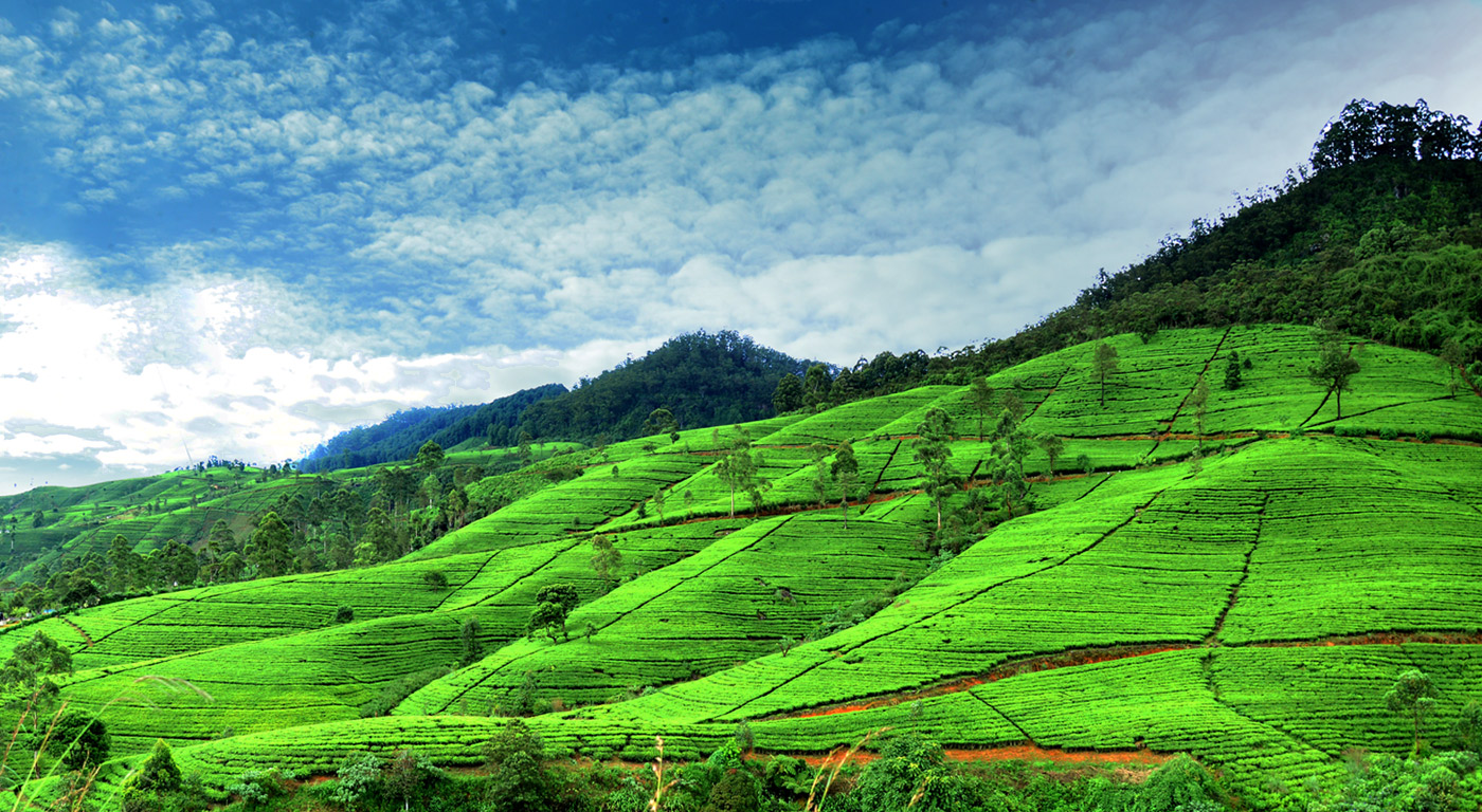 green golf traingle sri lanka essay Love to travel get free email communications from fodor's travel, covering must-see travel destinations, expert trip planning advice, and travel inspiration to fuel your passion.