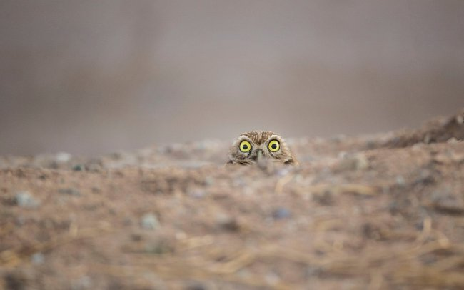 Победители Comedy Wildlife Photography Awards 2018