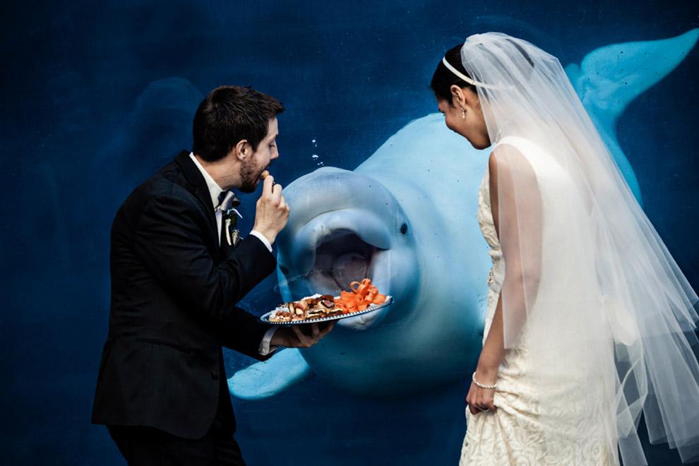 курьезных свадебных фотографий змей